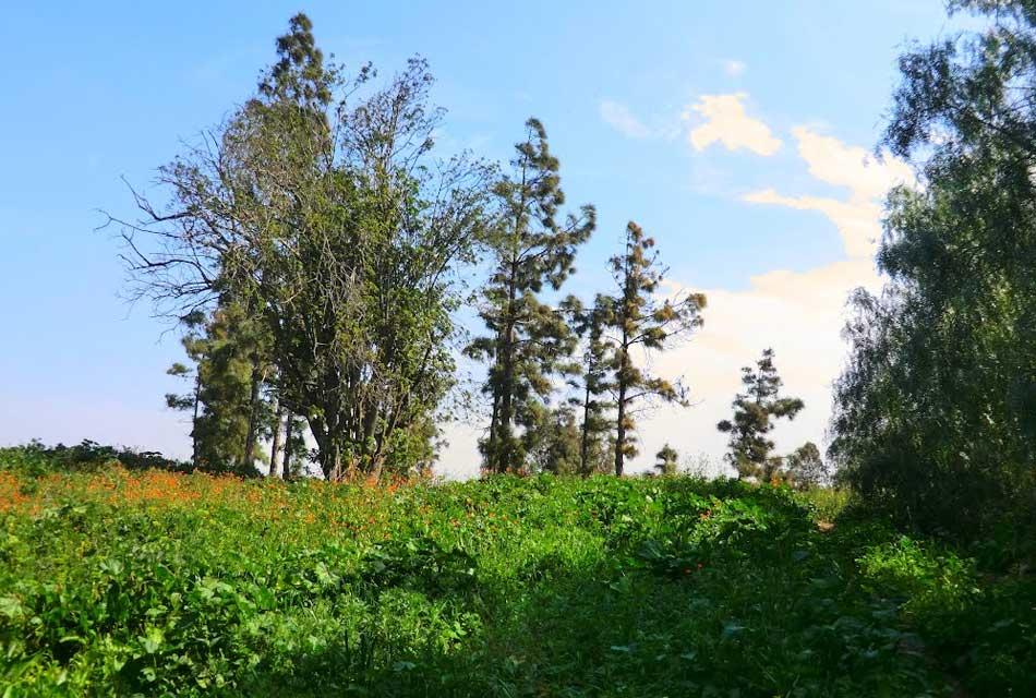 bouskoura forest morocco