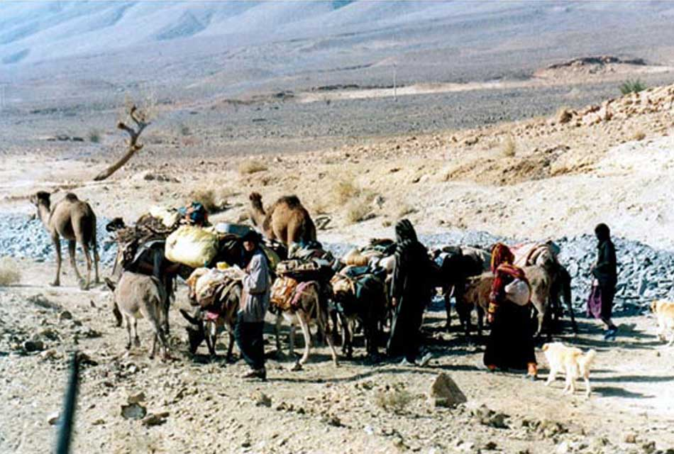 Amazigh Nomad