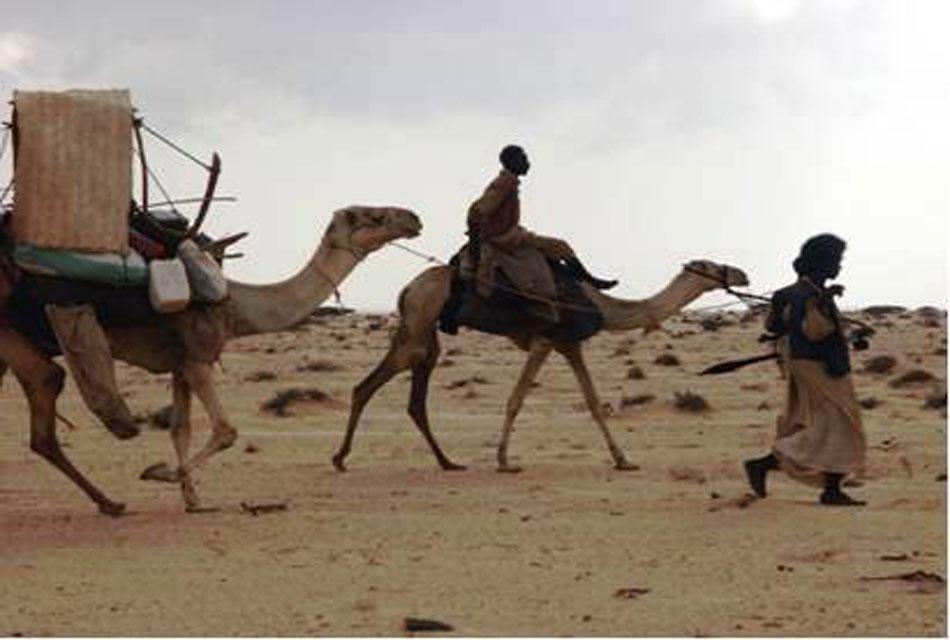 arabic-nomad