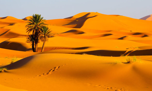 20 day tour from Casablanca to Desert