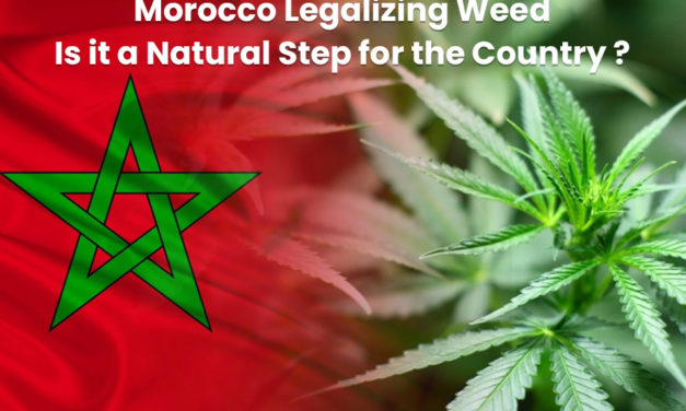 Morocco Legalizing Weed! Is it a Natural Step for the Country?